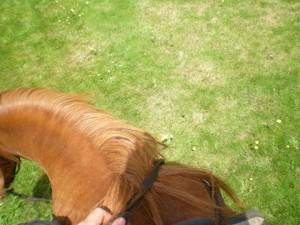 """balade cheval centre """"questre Kerbiriou"""